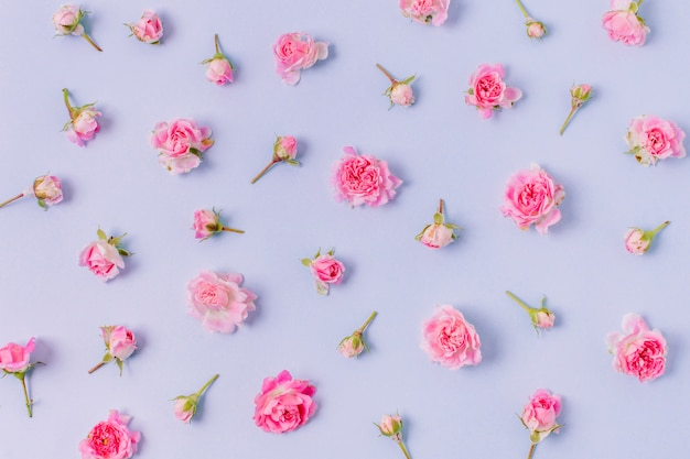 Close-up assortment of roses concept