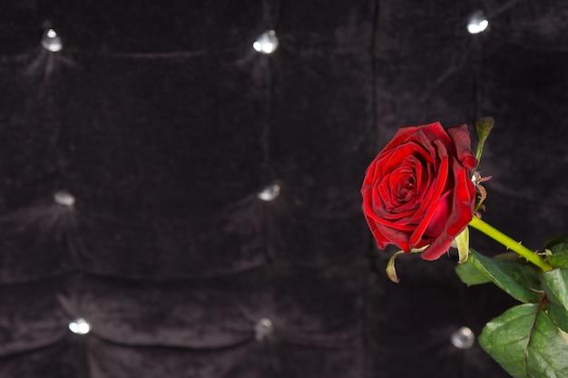 スパークリング泡の背景と魅力的な単一の赤いバラの花をクローズアップ