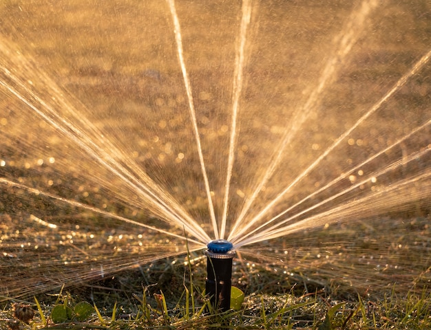 Close up of automatic sprinkler watering the lawn at sunset.