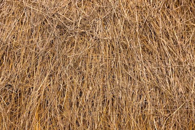 Предпосылка крупного плана и текстура соломы, сена, сухой травы. скопируйте пространство.
