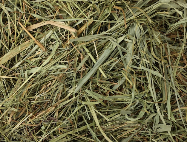 Close up background of fresh natural dried green grass hay and straw of renewable annual plant resources to feed livestock