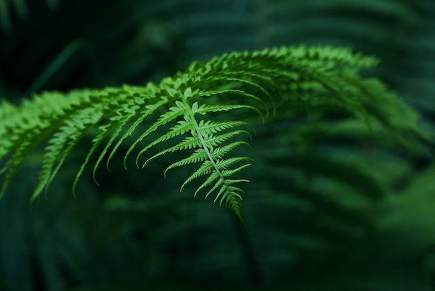 Close up background of fresh spring green fern leaves, low angle view