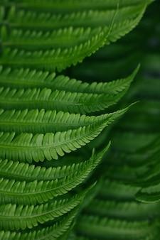 Закройте фон свежих весенних зеленых листьев папоротника, высокий угол обзора