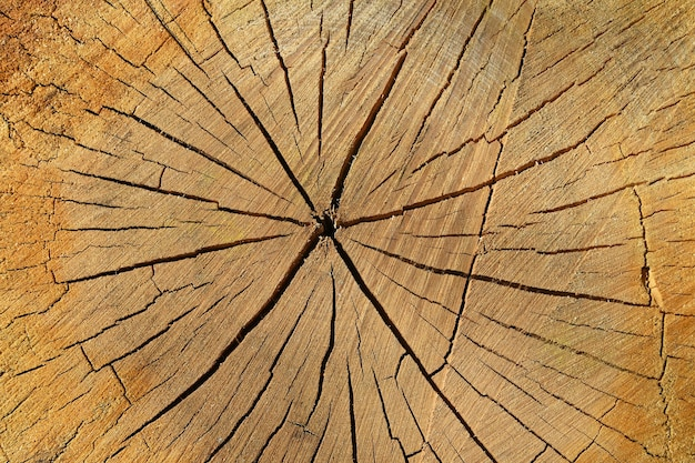Close up background texture of old weathered tree trunk cross section with wood splits and annual rings pattern, elevated top view, directly above