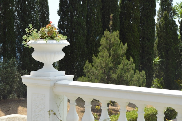 Close - up of balustrade with flower pot in park on trees background