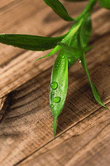 Close up of the bamboo plant leaves on wooden surface
