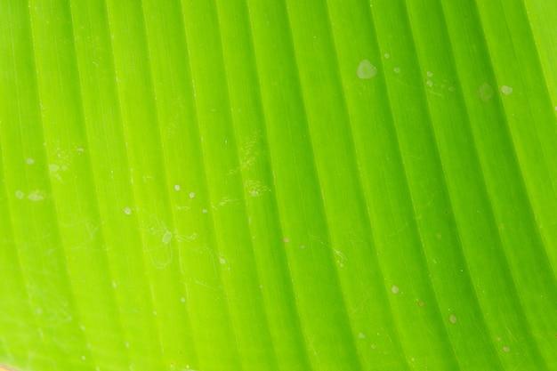 バナナの葉の背景のテクスチャを閉じる