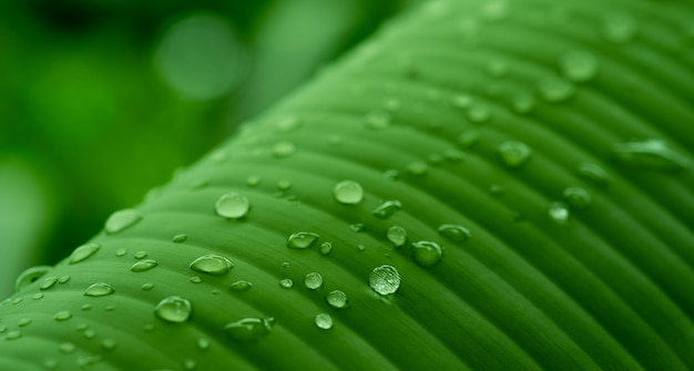 Close up on banana leaf details of abstract background