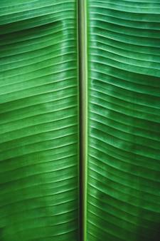 美しいパターンでバナナの葉のテクスチャをクローズアップ