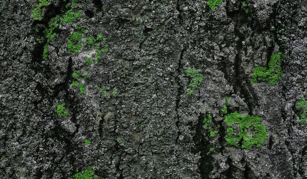 Close up on bark of a tree with green moss