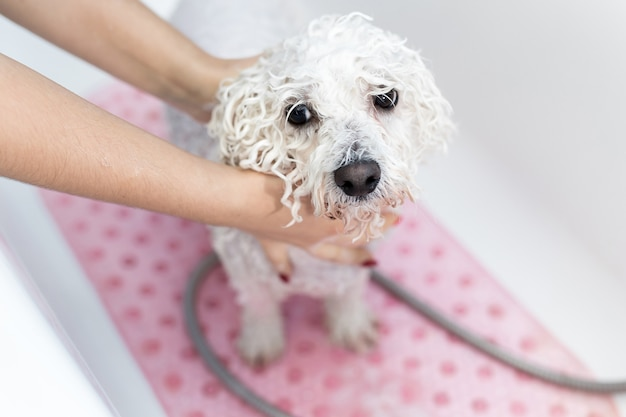 Close up of bathing dog in the bathroom