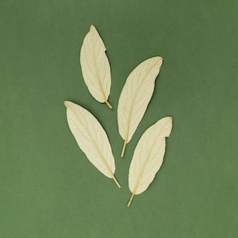 Close-up bay leaves on green background