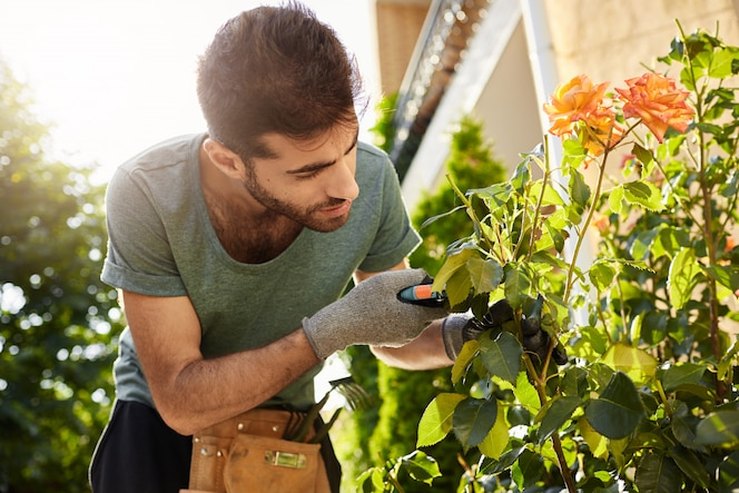 Close up of beautiful bearded florist in blue t-shirt with garden tools cutting dead flowers, spending summer morning in countryside house.