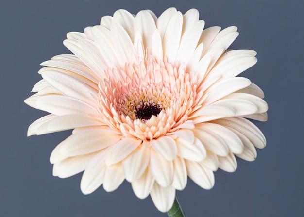 Primo piano del bel fiore sbocciato