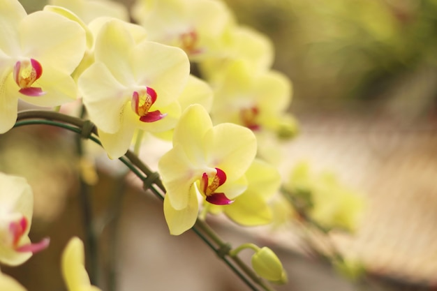 Close up of beautiful blooming orchid flowers