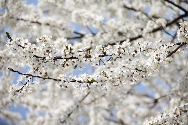 Крупным планом красивое цветущее дерево