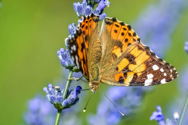 Close up  of a beautiful butterfly on a flower Free Photo
