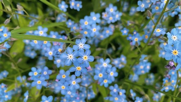 화창한 여름날 밖에 있는 키 큰 풀 사이에서 자라는 아름다운 들판 보라색 꽃.