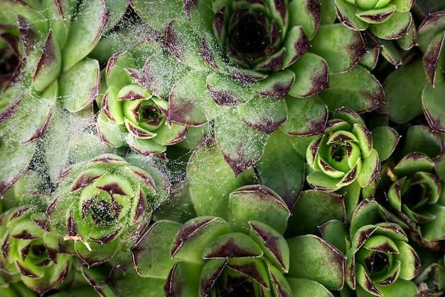 Primo piano su bellissimi dettagli di fiori in natura