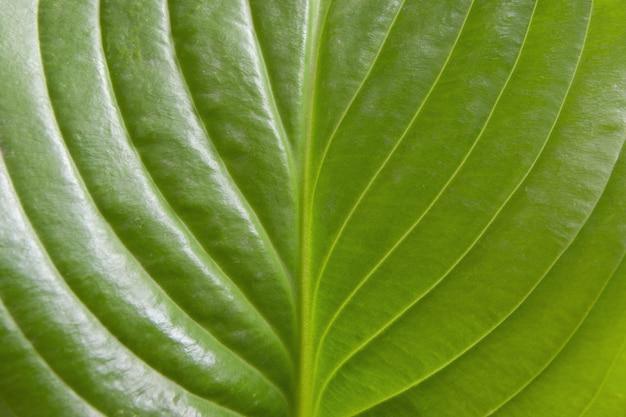 Крупным планом красивый зеленый лист весной фон