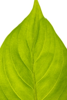 Close-up of beautiful green leaf
