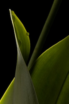 Primo piano di bella foglia verde