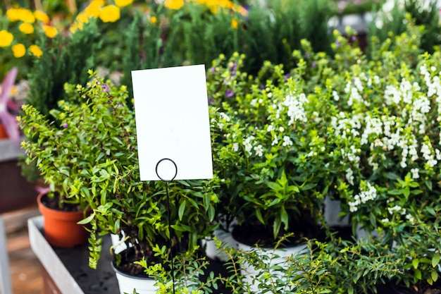 Close up of beautiful green plants for sale in a garden center with blank tags for mock up