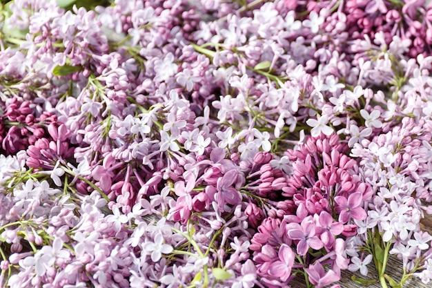 Крупным планом красивый сиреневый фон с фиолетовыми и белыми цветами