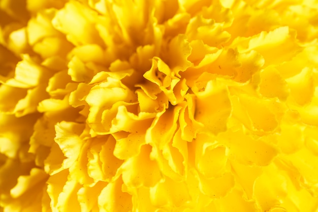 Close up beautiful marigold flowers