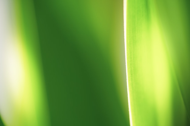 背景と質感のために美しい自然の緑の葉と日光をクローズアップします。