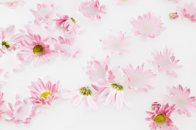 Close-up of beautiful pink flowers floating on water