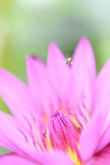 美しいピンクのユリの花と黄色の花粉緑の背景を閉じる