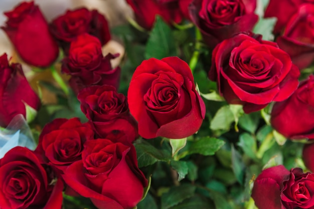 Close-up of beautiful red roses bouquet