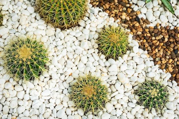 Close up beautiful tropical cactus garden, thailand