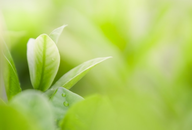 Close up beautiful view of natural green leaves on greenery blurred background