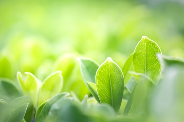 Close up beautiful view of nature green leaves on blurred greenery tree background