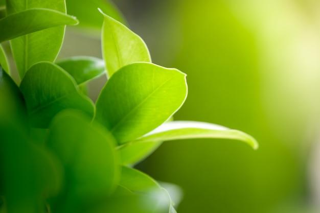 緑のぼやけた背景に自然の緑の葉の美しい景色を閉じます