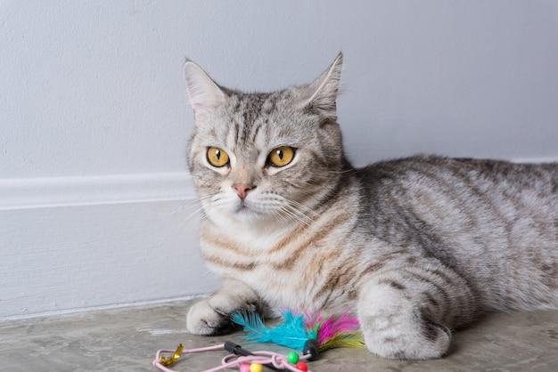 Закройте красивые желтые глаза котенка, сидящего со своей игрушкой из перьев