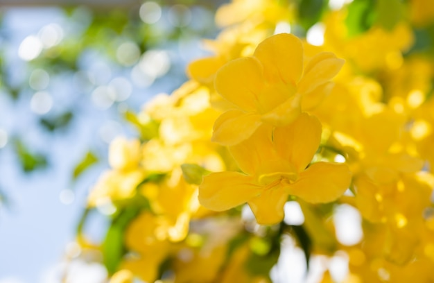 Close up beautiful yellow flowers with green leaves