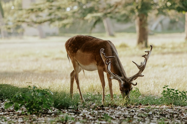 Close up of beautiful young deer in natural park of migliarino san rossore massaciuccoli, italy