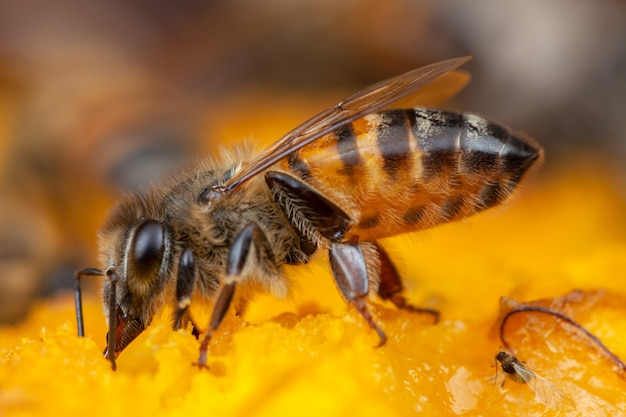 Close up bee extracting pollen from flower