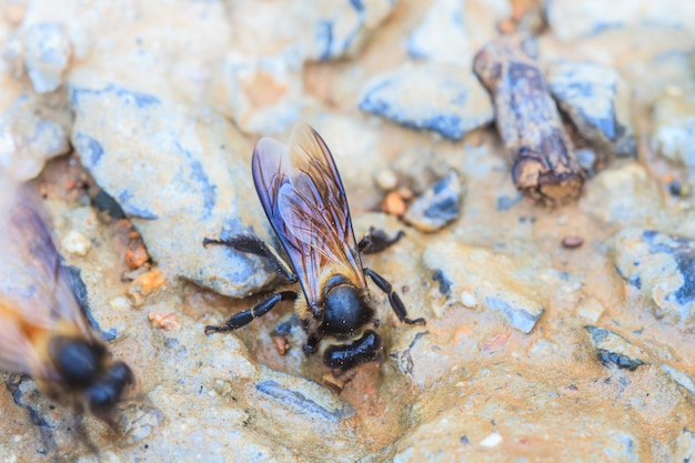 Close up bee on the ground