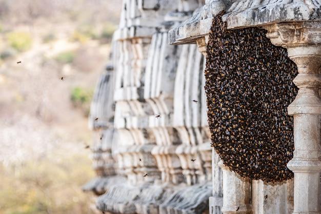 壁に蜂の巣をクローズアップ。