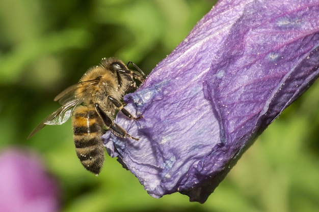 Close up of bee standing on flower