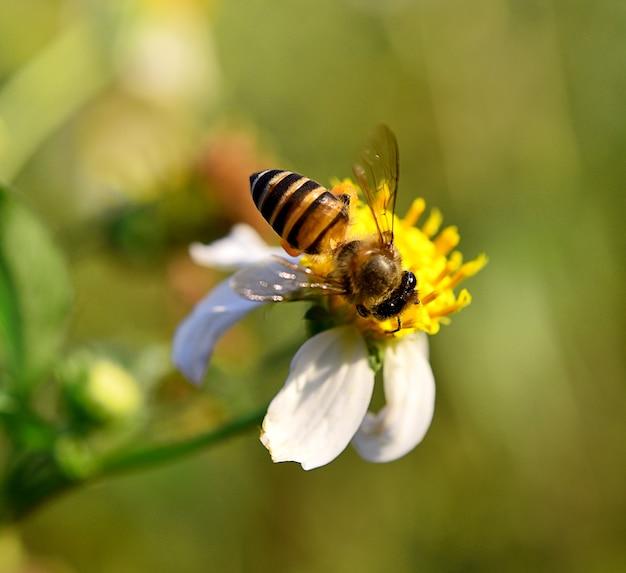 花の自然に蜂をクローズアップ背景をぼかします