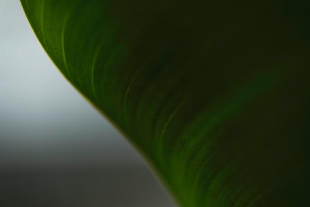 Close-up bent leaf