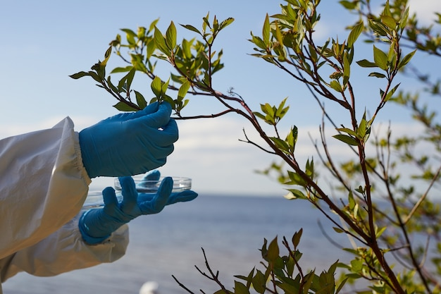 Close-up of biologist in protective gloves taking samples of green leaves of the tree outdoors