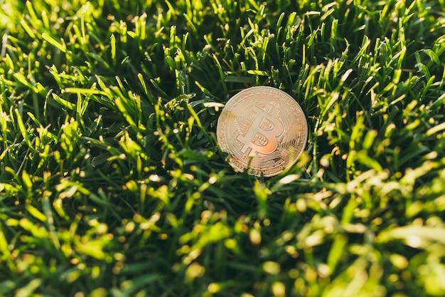 활기찬 봄 녹색 잔디, 햇빛 잔디에 황금색 동전, 비트코인을 닫습니다. 자연 질감, 벽지에 대 한 녹색 배경입니다. 소프트 포커스입니다. 필드, 금융 디자인, 가상 통화 개념입니다.