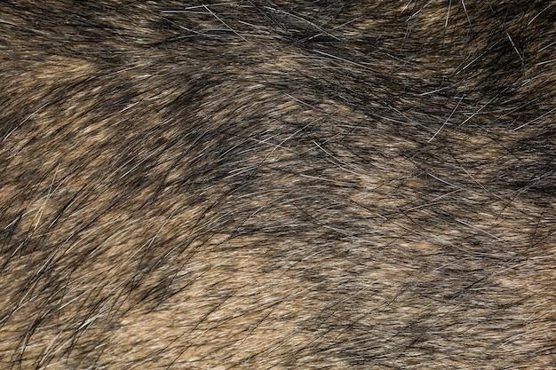 テクスチャとパターンのために黒と茶色の犬の皮をクローズアップします。
