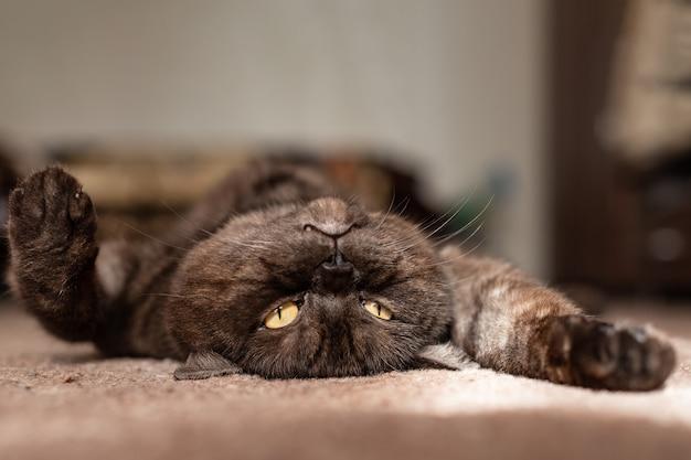햇빛에 basks 검은 고양이를 닫습니다